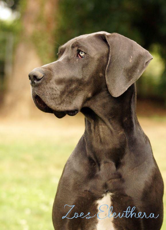 Ohrringe Silber Sonderanfertigung Hund Fini